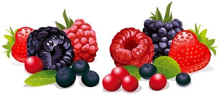 frutti di bosco isolato Vettoriali