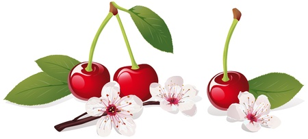 kersenboom: Stilleven met kersen en kersenbloesem Stock Illustratie