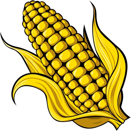 corn Stock Vector - 13847846