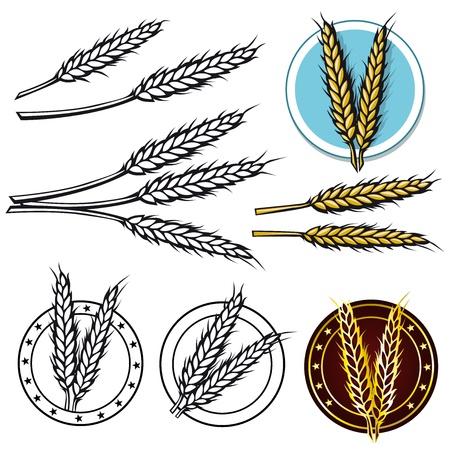 wheat crop: grano icono Vectores