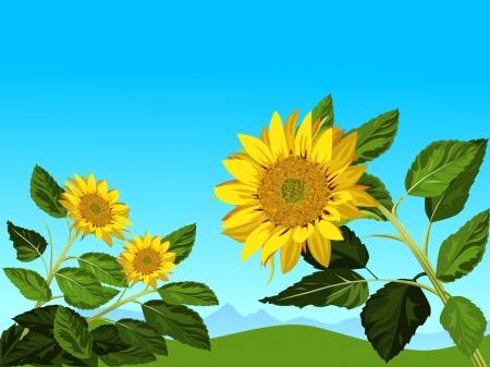 sunflowers against blue sky Vector