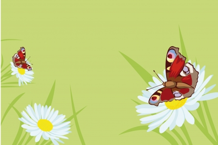 big daisy: butterfly background with flowers