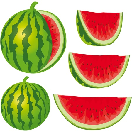 water melon isolated on white background Vector