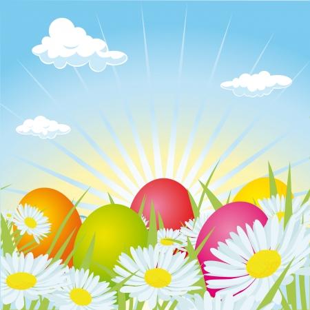 ster eggs hidden in daisy field Vector