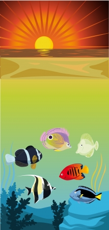 color fishes, see and beach in sunset Stock Vector - 15017168