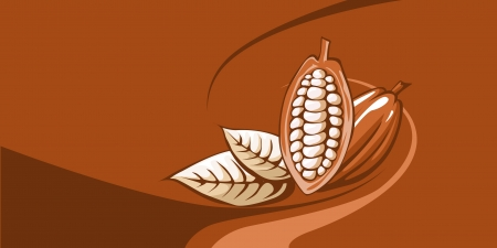 cocoa bean with chocolate background  Vector