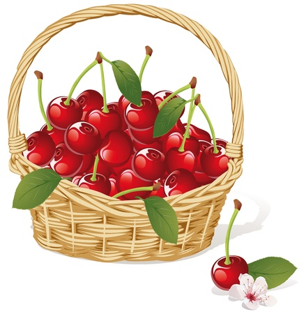 cherry basket Vector