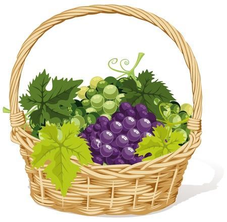 wicker basket: wine basket Illustration