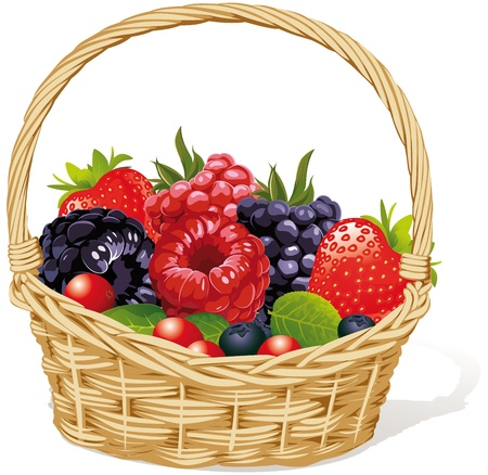 basket with berries Vector