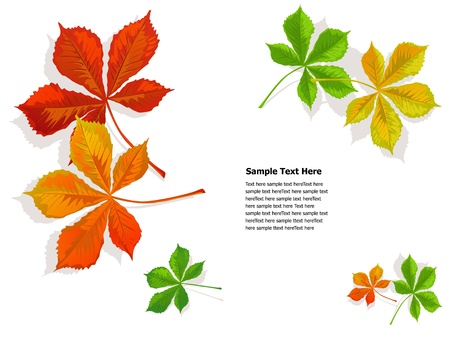 chestnut: fall colorful chestnuts leaves  Illustration