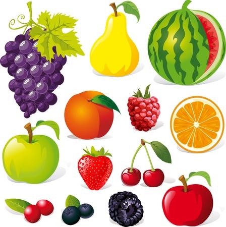cranberry: fruit illustration isolated on white background