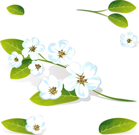 an inflorescence: spring flower vector isolated on white background Illustration