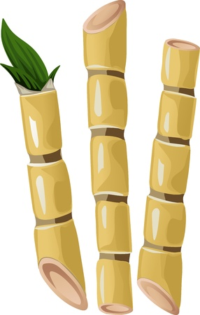 sugarcane isolated on white background Ilustracja