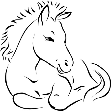 thoroughbred horse: foal - black outline illustration on white background