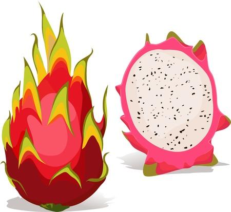 dragon fruit: dragon fruit - vector illustration isolated on white background