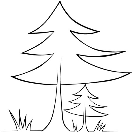 conifers: tree - black outline illustration Illustration
