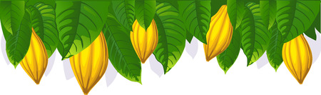 cacao: cocoa pod and leaf - the upper bar- vector illustration