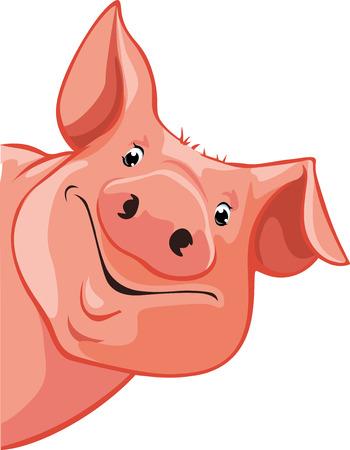 cerdo se asoma desde la izquierda - ilustración vectorial
