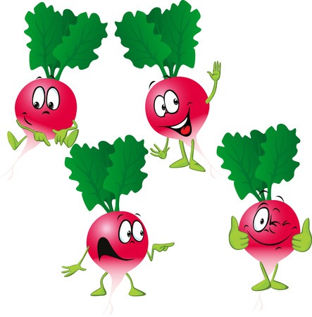 radish - funny vector cartoon