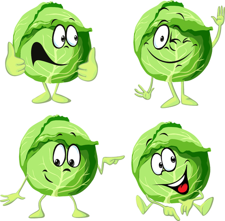 green cabbage cartoon isolated on white background