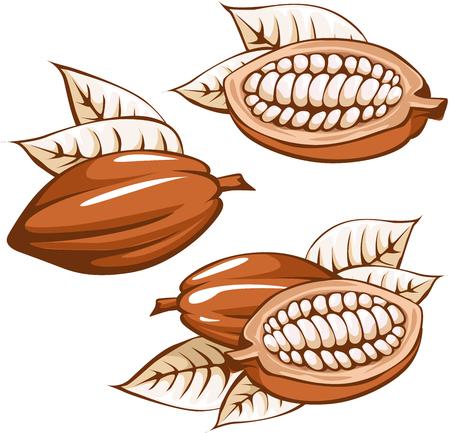 grano de cacao marrón