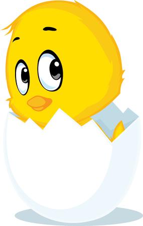 chicken born from eggshell - vector illustration