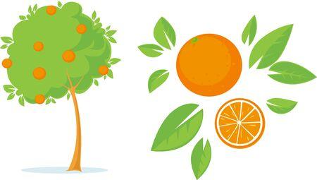 Orange Tree Flat Design on white Illustration