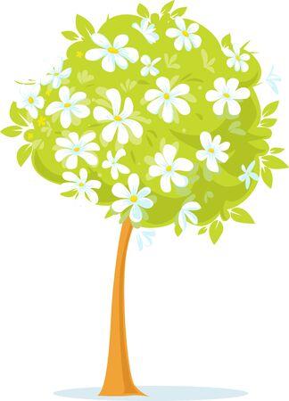 Spring White Flower Tree or Blooming Apple Tree