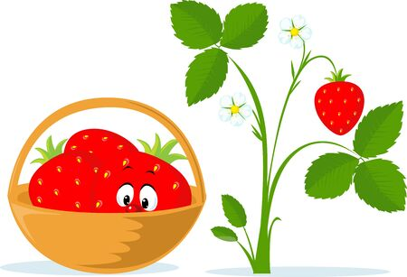 Strawberry Cartoon in Basket and Strawberry Plant Flat Vector Illustration