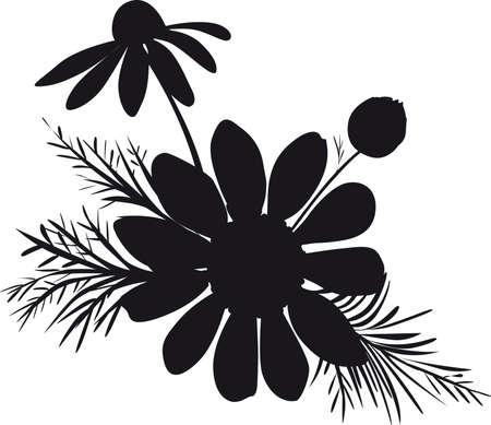 Chamomile Silhoulette Illustration on White Background