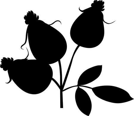 Rose Hip Silhoulette - Black Vector Illustration Illustration