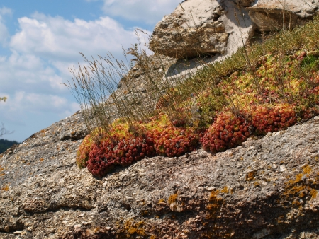 petites fleurs: petites fleurs qui s'�panouissent dans le rocher Autriche Arbesbach