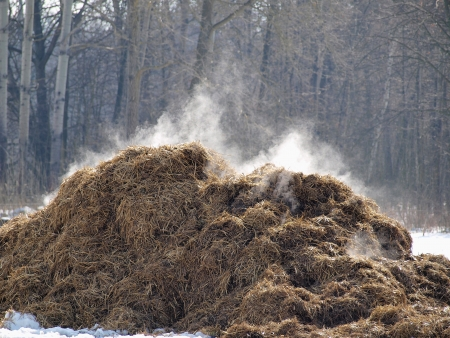 exported: exported fresh horse manure in the pasture Stock Photo