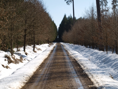 mud and snow: A long, straight road winter . South Bohemia