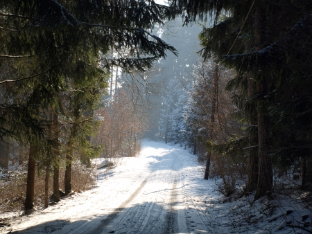 mud and snow: path through the woods in winter. South Bohemia