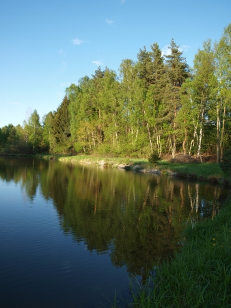 mirroring: Mirroring the forest on a pond. South Bohemia Stock Photo