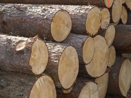 Dřevařského průmyslu. Kácení stromů a těžba dřeva Reklamní fotografie