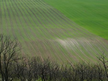 undulating: Spring undulating fields . northern Bohemia Stock Photo