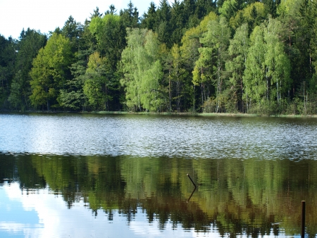 Forest reflection in a pond. South Bohemia photo