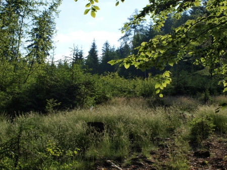 Forest clearing in the evening   South Bohemia