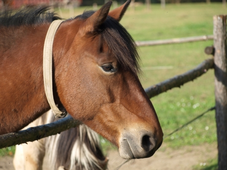 republik: brown horse on pasture, South Bohemia  czech republik Stock Photo