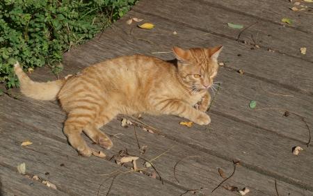 republik: young tabby cat  czech republik