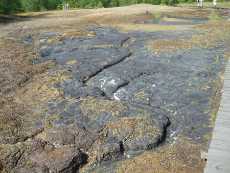 rarity: European rarity - the so-called diatomite shield, Soos National Nature Reserve  Czech Republic