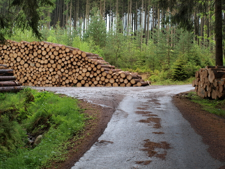 logging, South Bohemia, Czech Republic