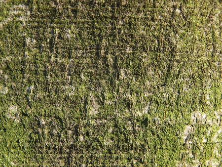 republik: birch bark, South Bohemia, Czech Republik