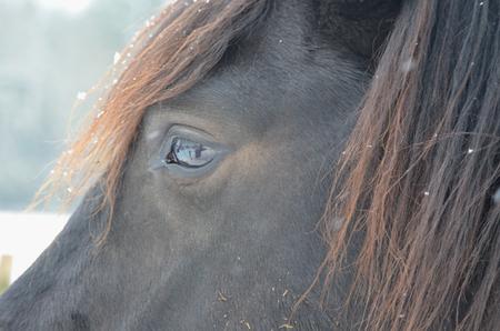 republik: eye black horse, South Bohemia. czech republik