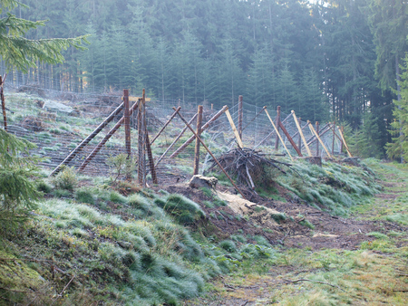 reforestation, South Bohemia, Czech Republic Stock Photo