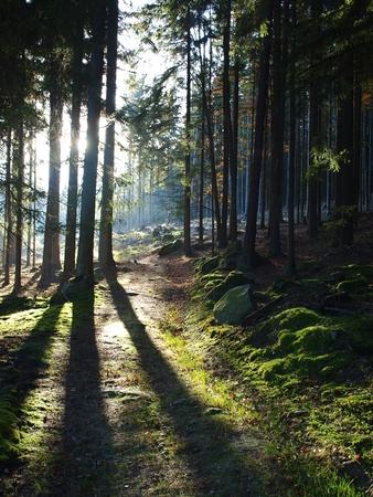republik: view of the forest landscape. South Bohemia, Czech Republik