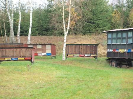 bohemia: Traditional beekeeping, South Bohemia, Czech Republic