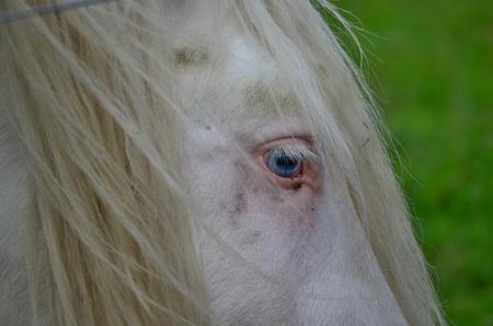 republik: horse eye South Bohemia Czech Republik Stock Photo